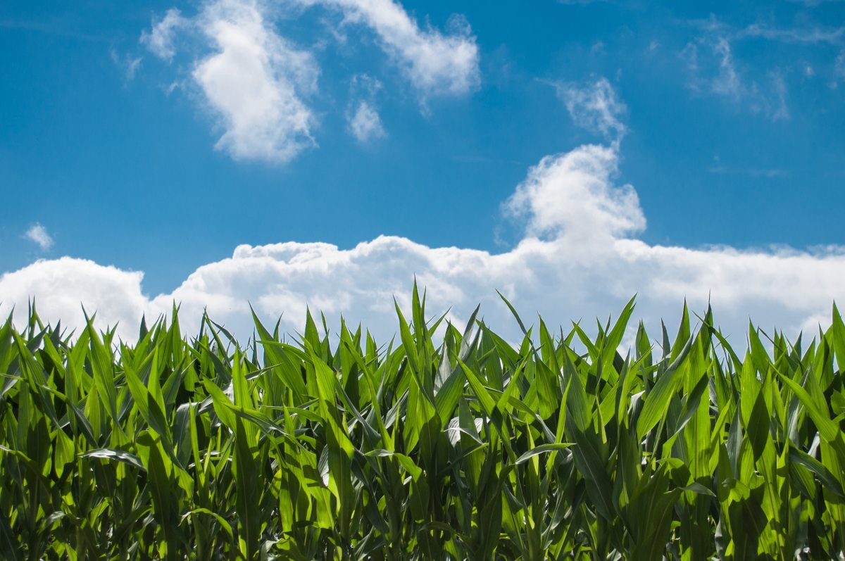 Panic Attacks: Like Children of the Corn, Only Scarier.
